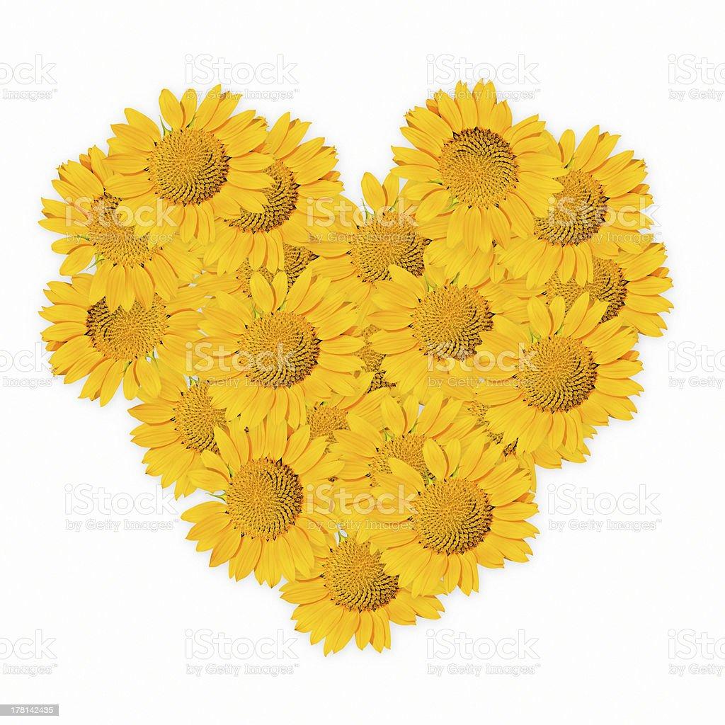 sunflower heart. stock photo