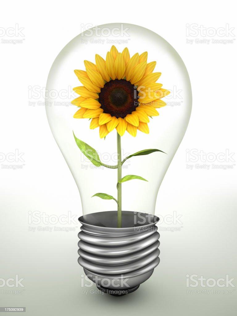 Sunflower in lightbulb royalty-free stock photo