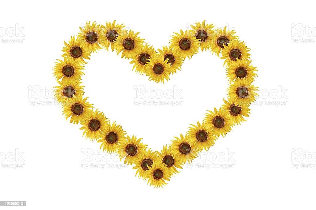 sunflower of heart. stock photo