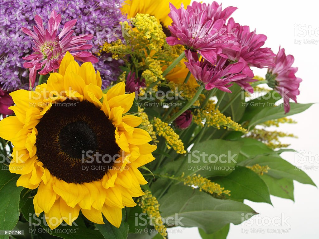 Sunflower on Left royalty-free stock photo
