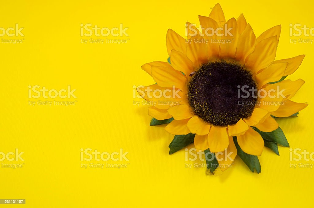 Sunflower on yellow background royalty-free stock photo