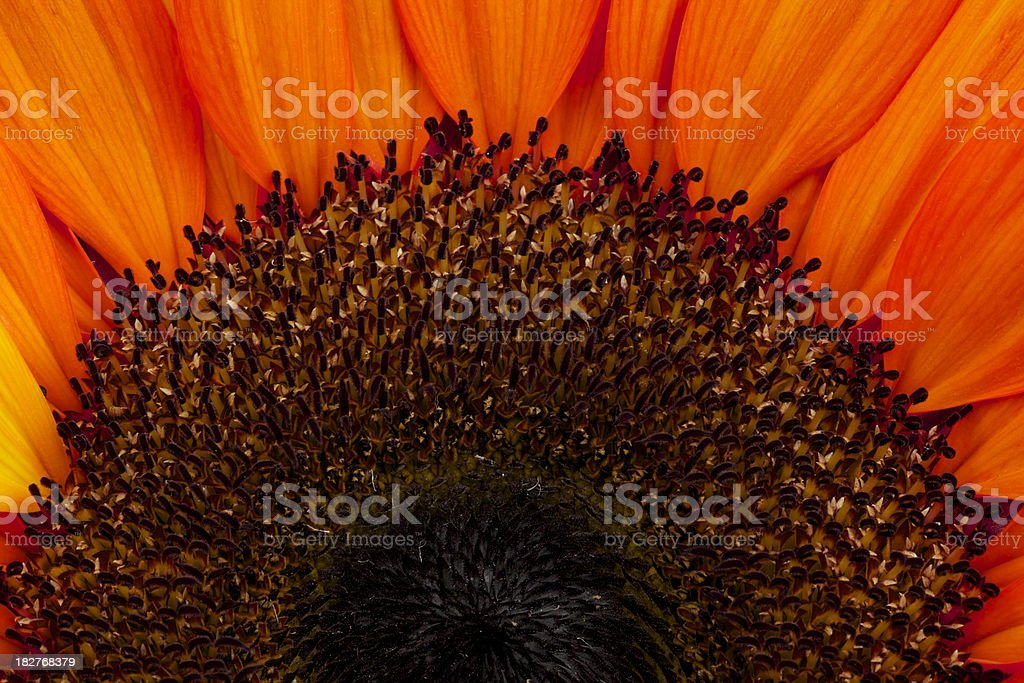 Sunflower, Orange, Abstract, Flower, Background, Pattern, Petals royalty-free stock photo