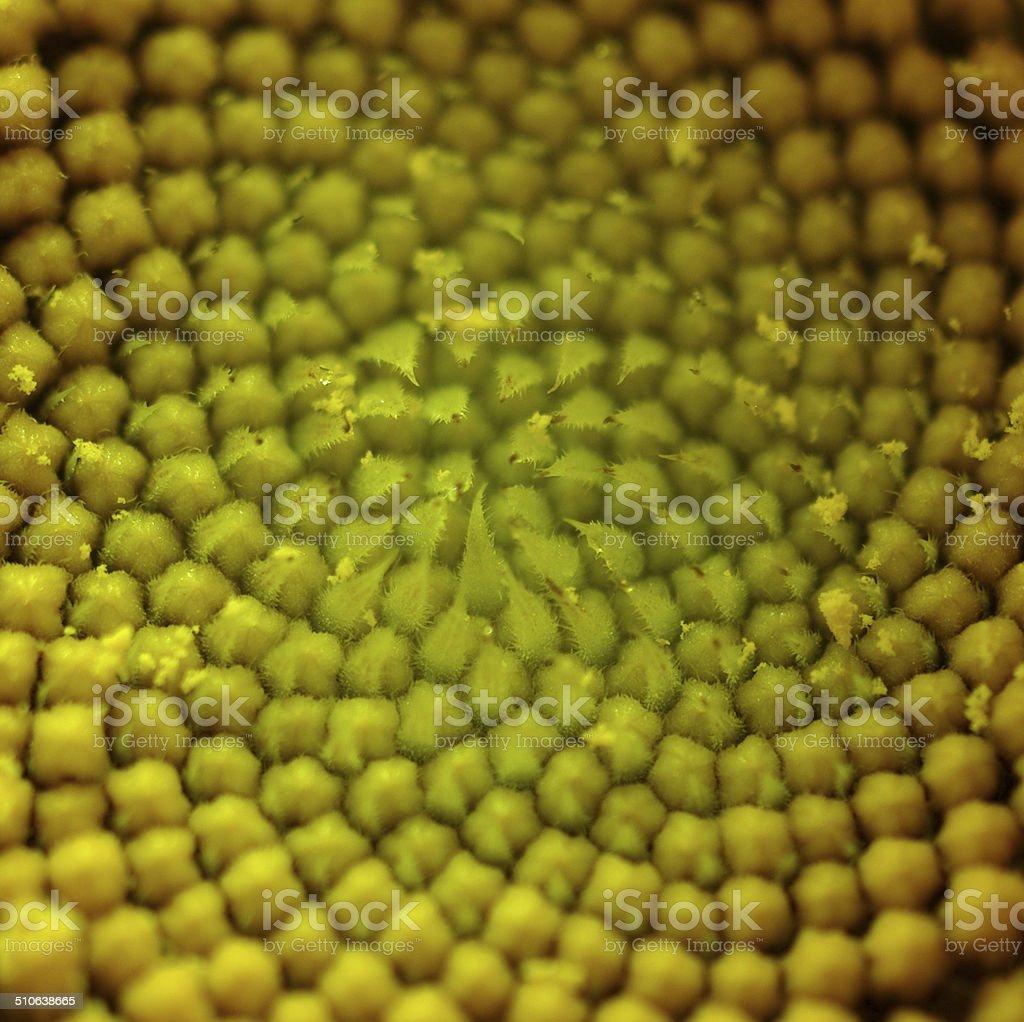 Sunflower Pattern Closeup - Stock Image stock photo