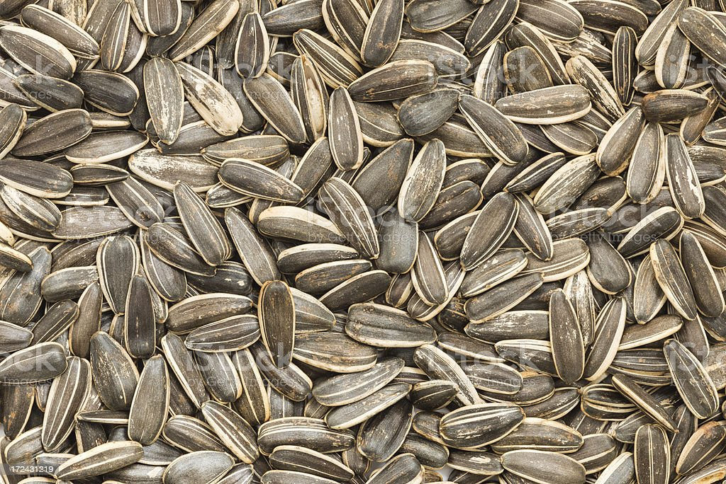 Sunflower Seed Backgrounds royalty-free stock photo