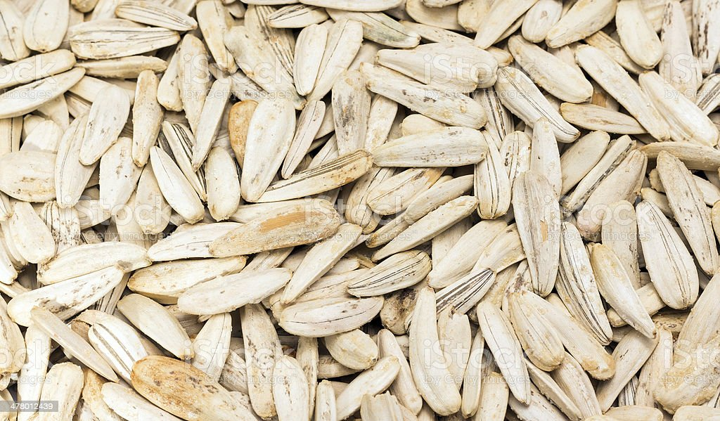 Sunflower Seed royalty-free stock photo
