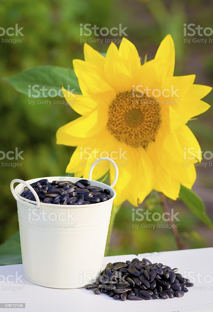 Sunflower seeds in bucket and sunflower royalty-free stock photo