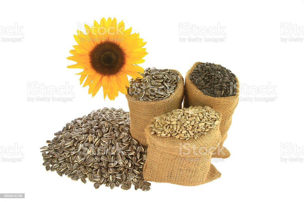 Sunflower seeds in burlap bags spiled in front of sunfloer stock photo