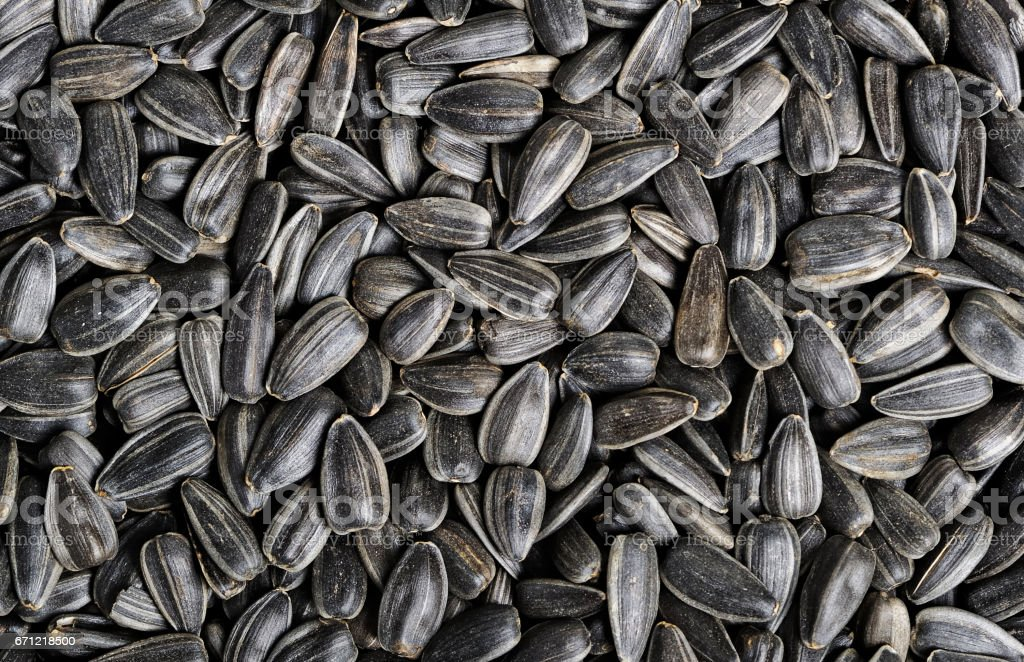 Sunflower seeds stock photo