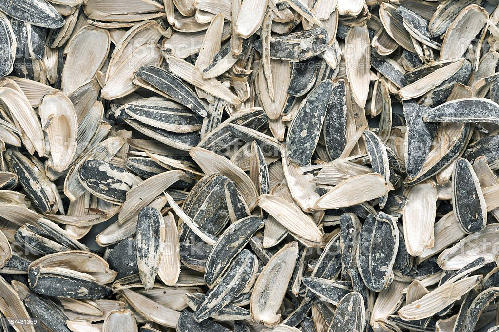 sunflower seeds with shell scours stock photo