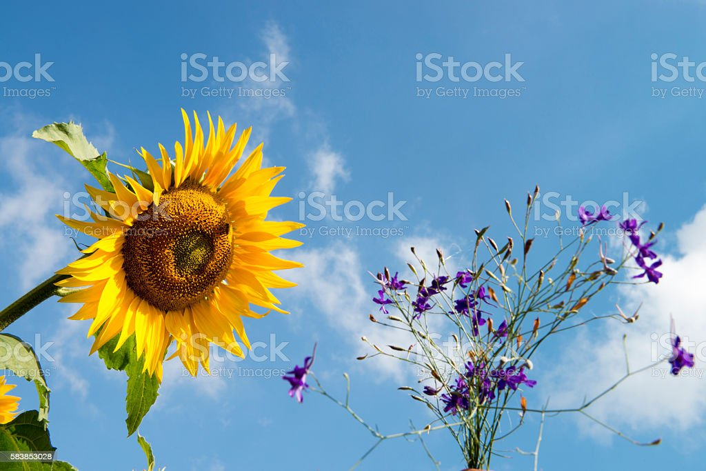 Sunflower with Flowers against sky stock photo
