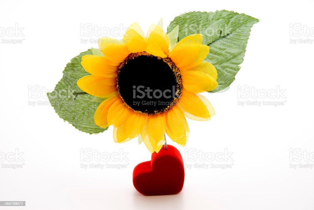 Sunflower with red heart stock photo