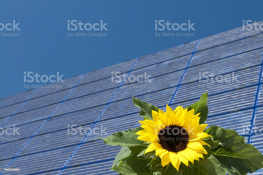 sunflower with solar panel in background royalty-free stock photo