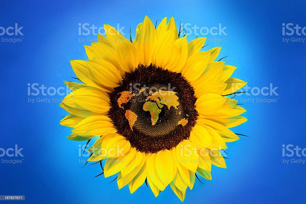 Sunflower World Map stock photo
