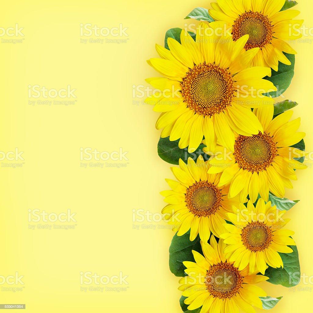 Sunflowers arrangement stock photo