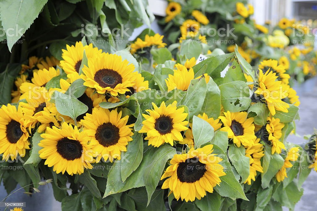 sunflowers at flower market royalty-free stock photo
