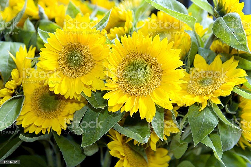 Sunflowers at  Flower Market stock photo