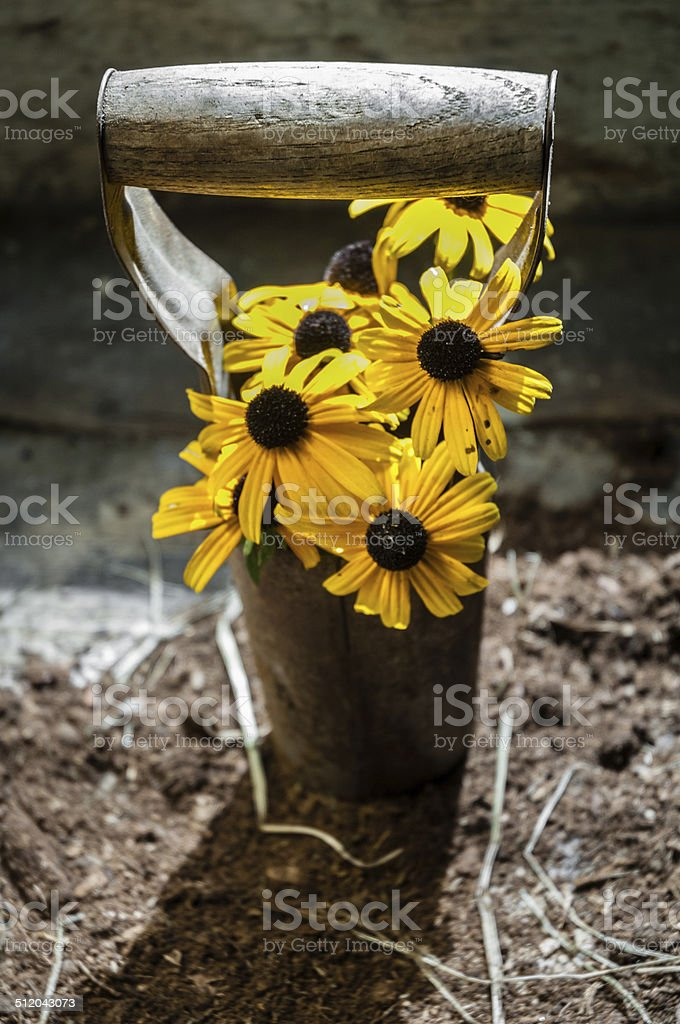 Sunflowers in bulb planter stock photo