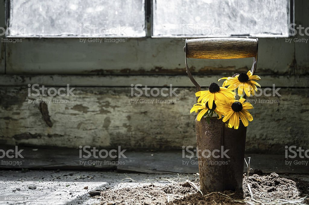 Sunflowers in front of vintage window stock photo