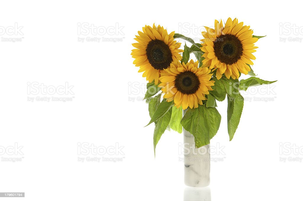 Sunflowers, marble vase, isolated in white royalty-free stock photo