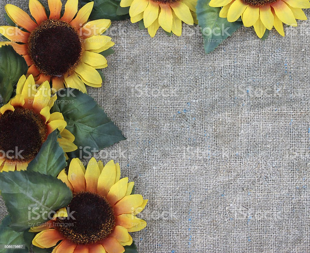 Sunflowers on fabric stock photo