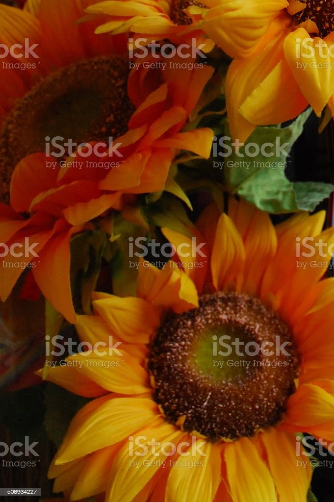 Sunflowers up close royalty-free stock photo