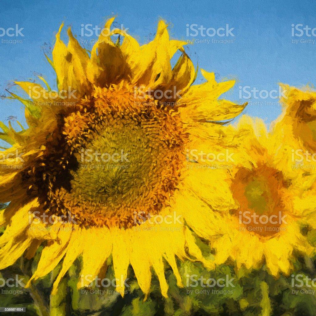 Sunflowers.Wildflowers. stock photo