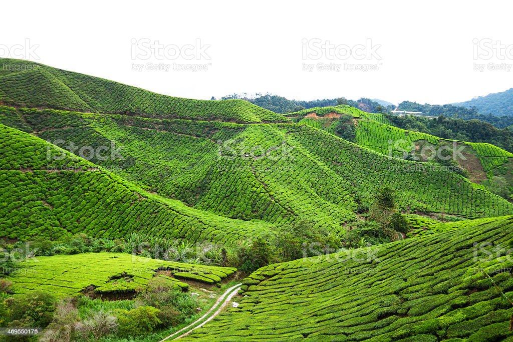 Sungai Palas tea plantation and valley stock photo