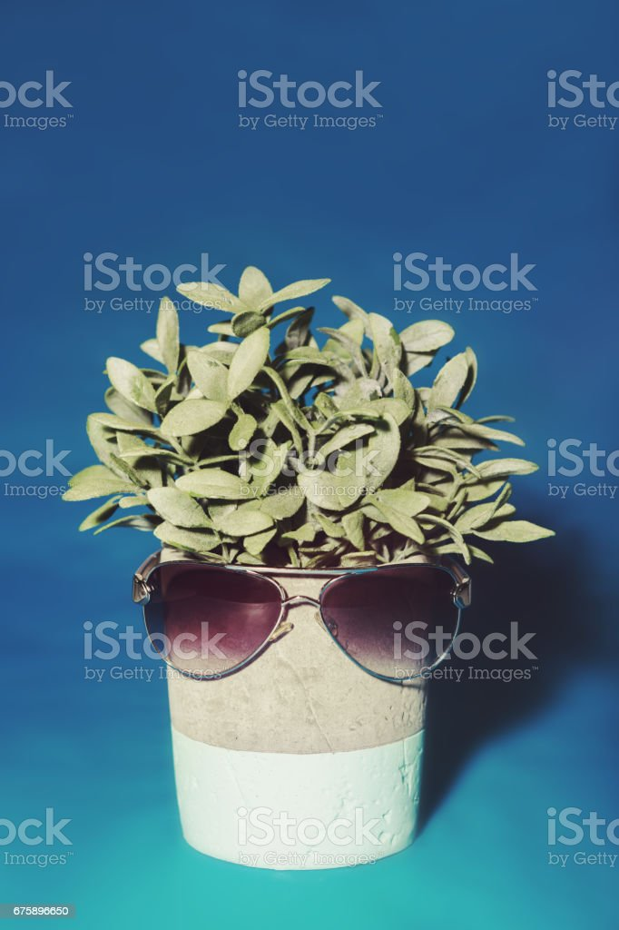 Sunglasses sitting on a pot plant stock photo