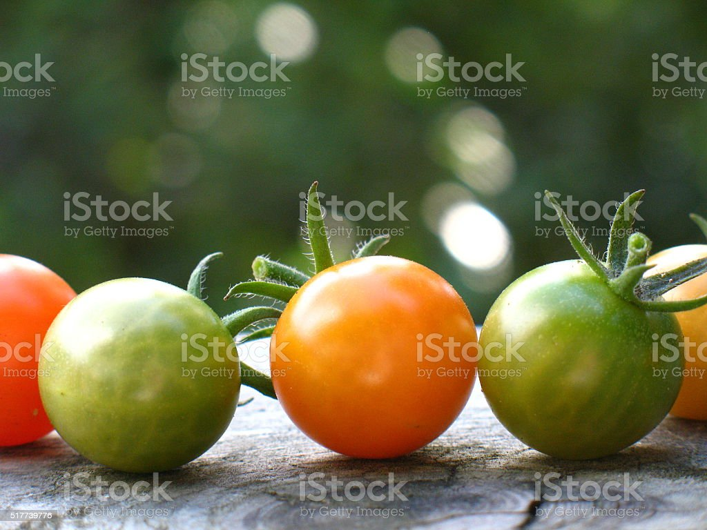 Sungold Tomatoes stock photo