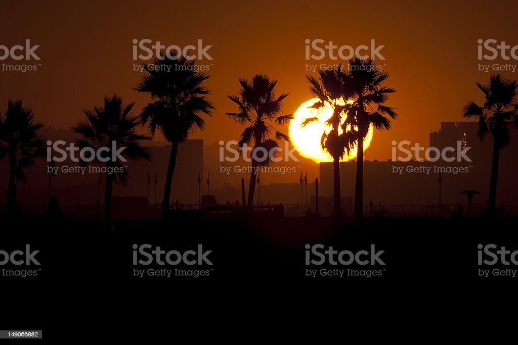 Sun-Kissed Palm trees royalty-free stock photo
