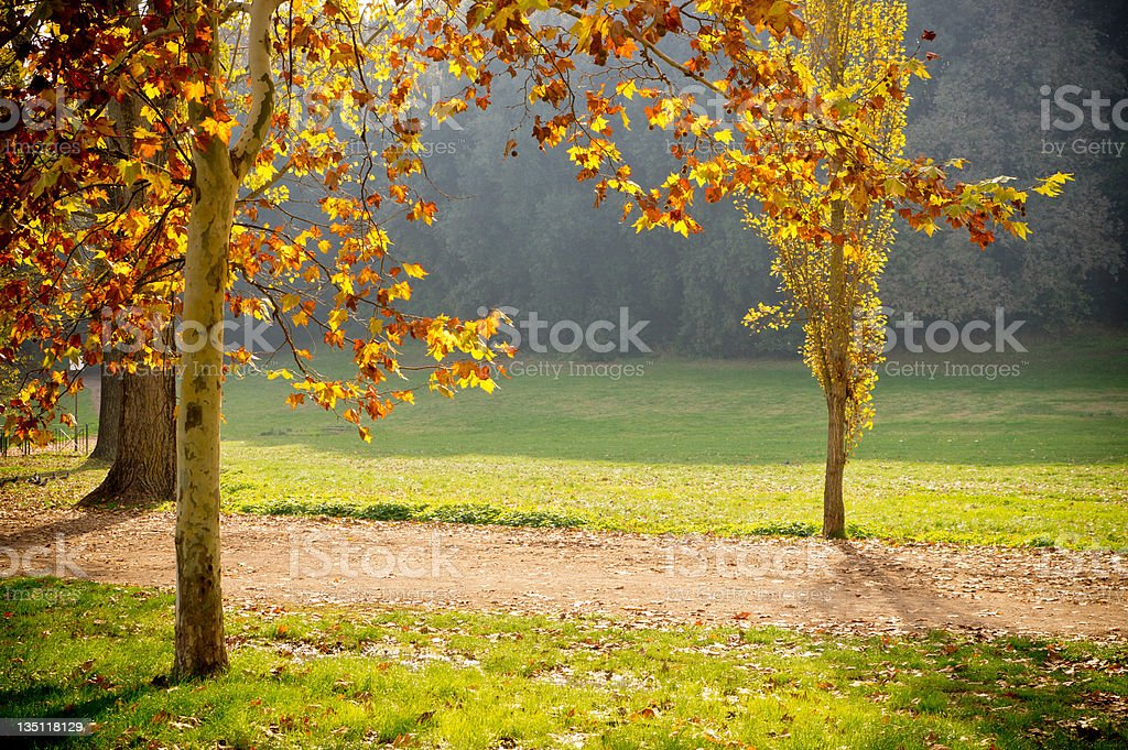 Sunlight And Autumn Trees royalty-free stock photo