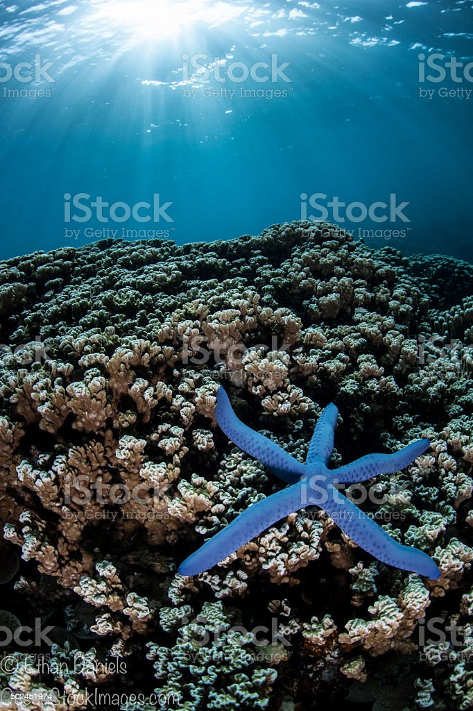 Sunlight and Blue Starfish stock photo