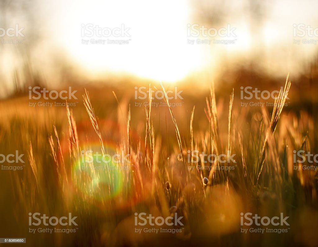 Sunlight and Grass Background stock photo