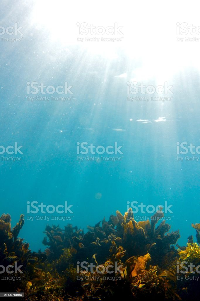 Sunlight and sea weed stock photo