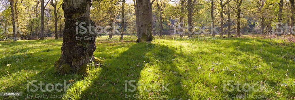 Sunlight and shadows in the forest royalty-free stock photo