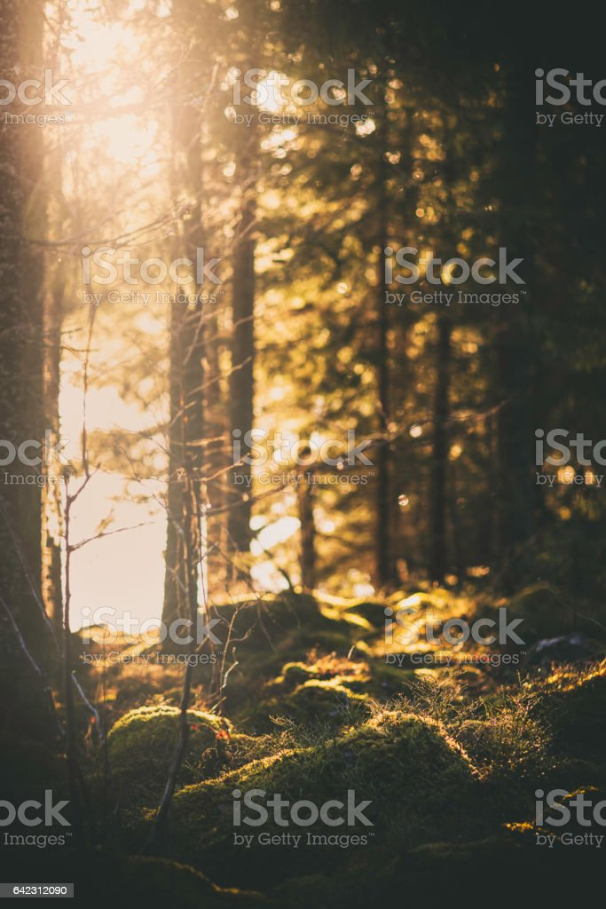 Sunlight at the edge of the forest stock photo