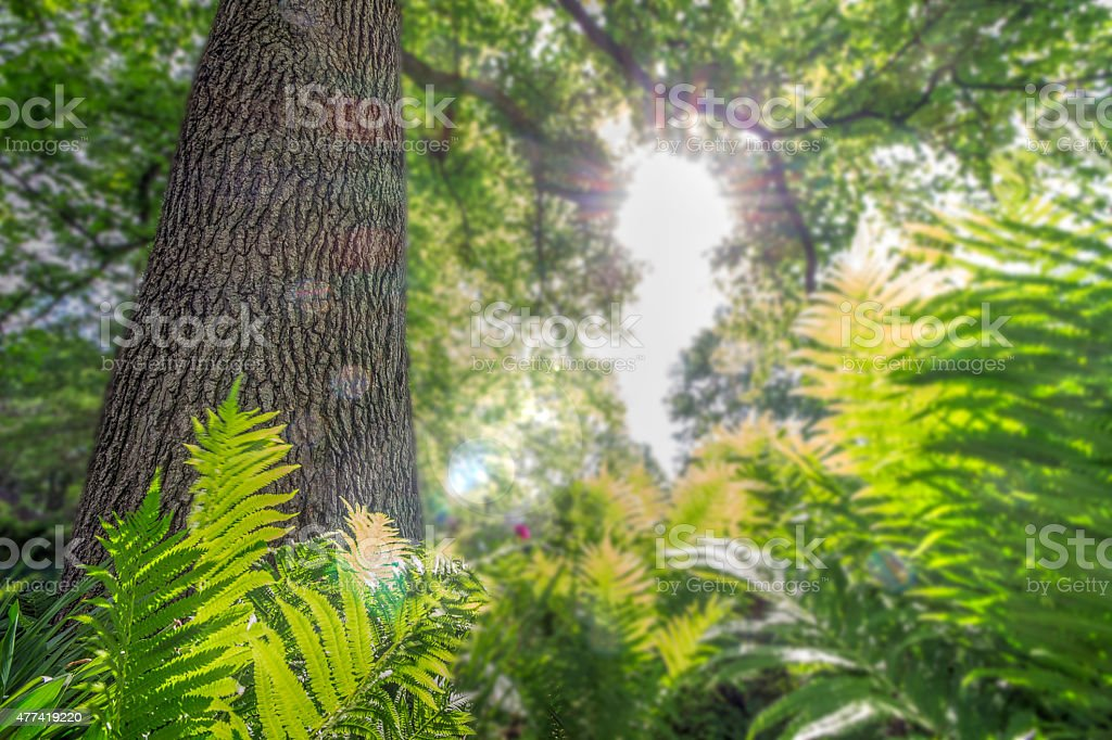 Sunlight breaking through Trees and Fern stock photo