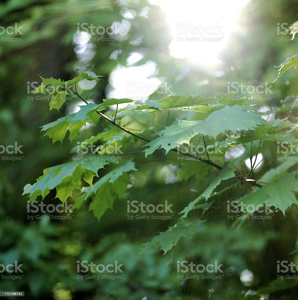 sunlight  breaks the green stock photo