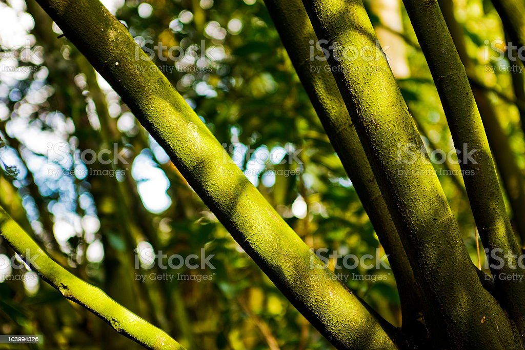 Sunlight Falling On Tree Branches royalty-free stock photo