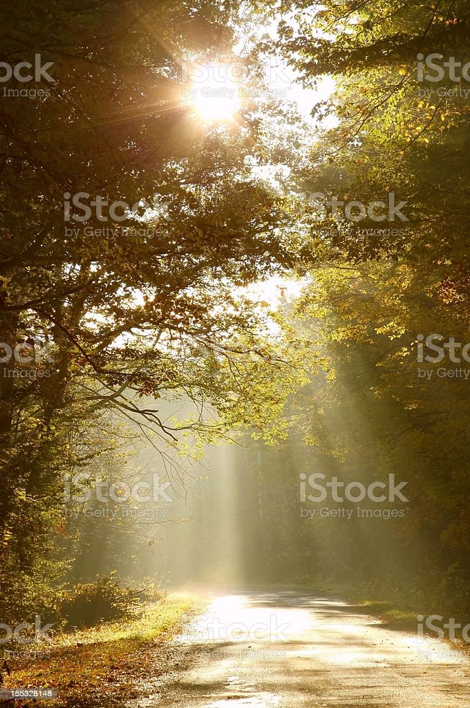 Sunlight falls on the country road stock photo