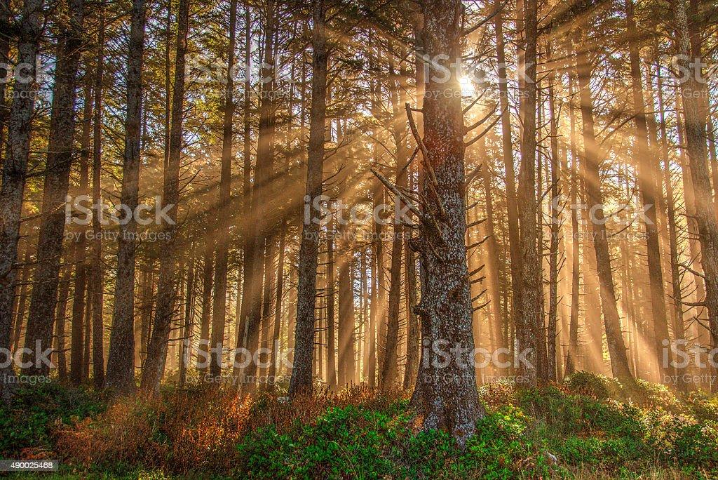 Солнечный свет фильтрации через деревья-накидка чеку State Park Стоковые фото Стоковая фотография