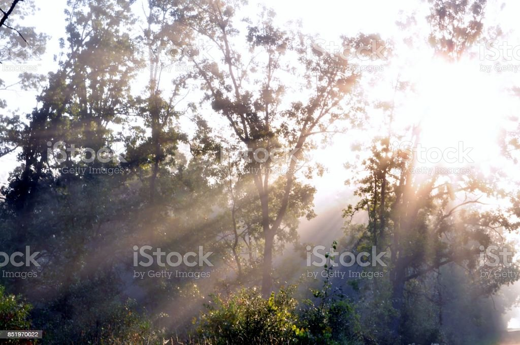 Sunlight glowing through boughs of trees. stock photo