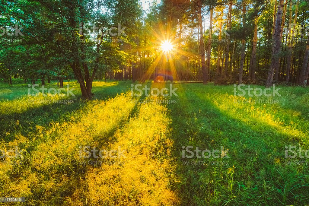 Sunlight In Green Coniferous Forest, Russian Nature stock photo