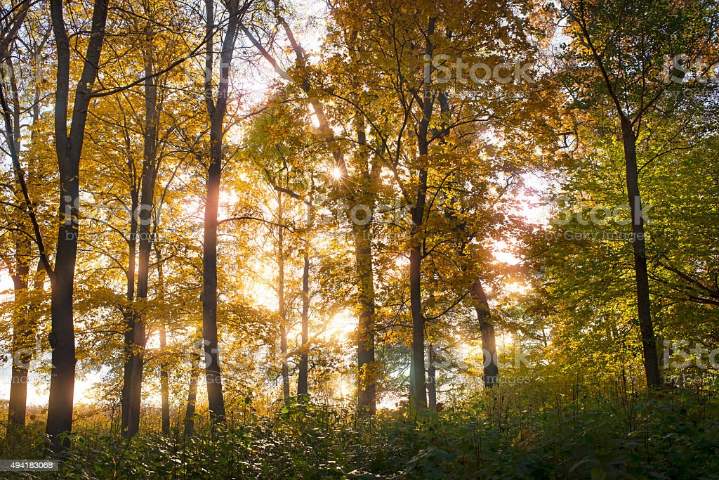 sunlight in leaves and forest stock photo
