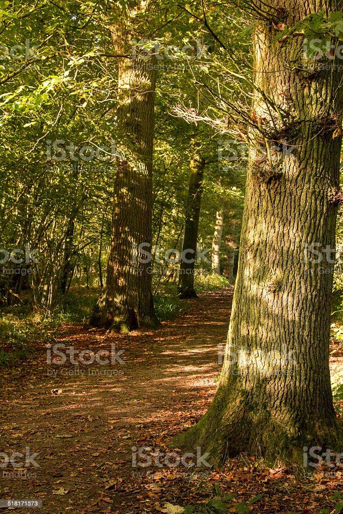 Sunlight in the autumn stock photo