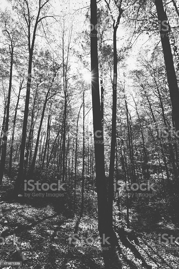 Sunlight in the forest royalty-free stock photo
