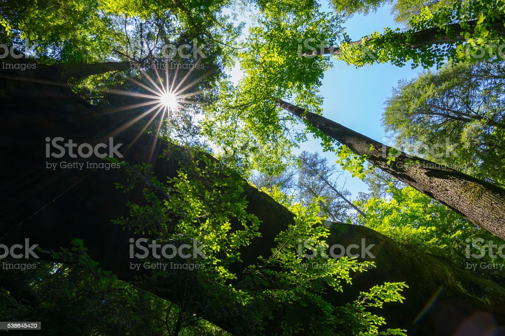 Sunlight in the Forest stock photo
