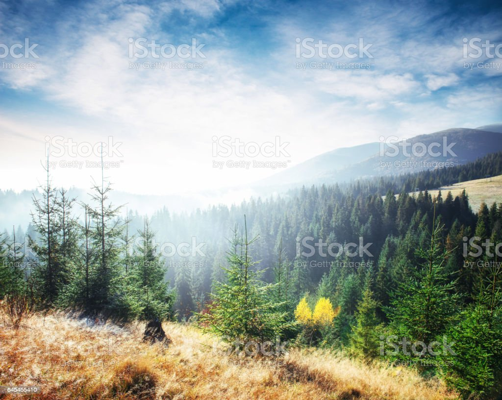 Sunlight in the green forest early morning. Fantastic fog in the stock photo