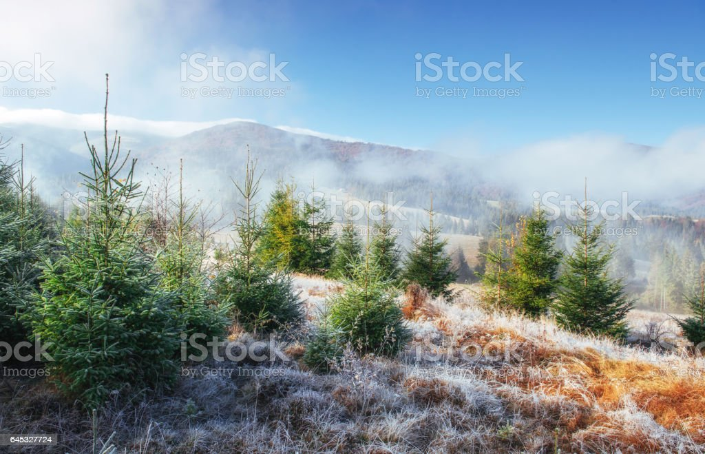 Sunlight in the green forest early morning stock photo