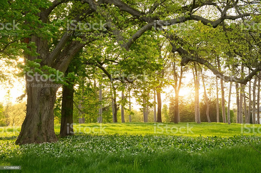 Sunlight in the green forest springtime stock photo